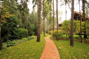 Права на земли лесного фонда