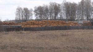 Права на земли лесного фонда: пользование и аренда