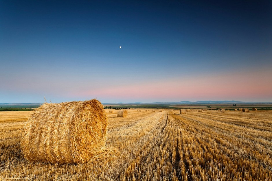 Выкуп земли сельхозназначения